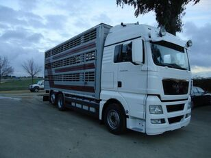 MAN TGX 26 480 camión para transporte de ganado